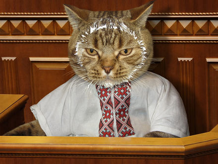 Обои Кот, у которого вся морда в сметане, сидит в кресле депутата, фотограф Ирина Кузнецова