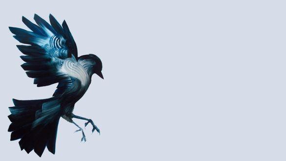 Обои Летящая ворона на белом фоне, художник Adam S. Doyle / Адам Дойль
