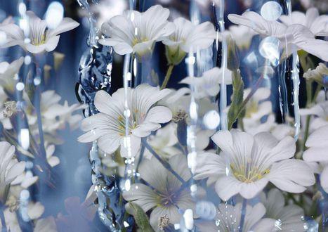 Обои Белые цветы под дождем, by dashakern