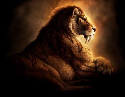 Обои Лев с огромными клыками, by jocarra