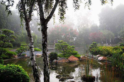 Обои Пруд с полузатопленными кустами и деревьями на фоне тумана