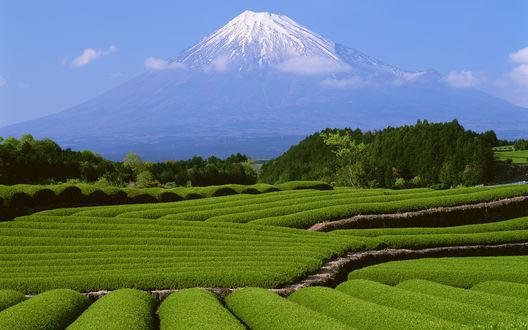 Обои Зеленые поля и гора Фудзияма на горизонте, Япония