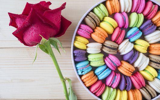 Обои Красная роза в капельках воды лежит на деревянной поверхности возле коробки с разноцветными макарунами