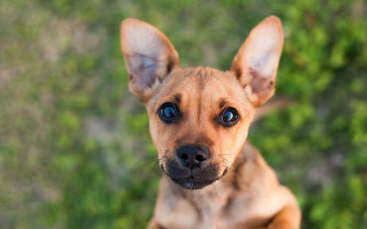Обои Милый щенок на размытом фоне смотрит вверх