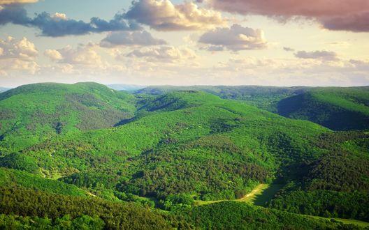 Обои Обширные леса под небом с облачками