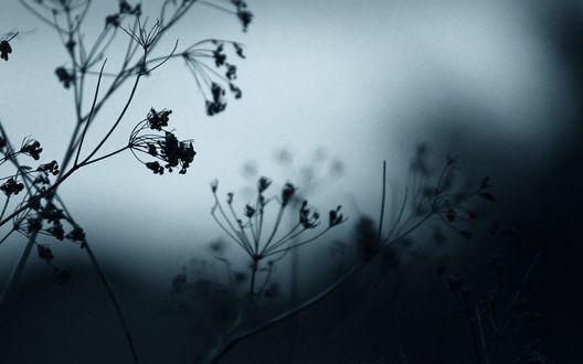 Обои Завядшие цветы в тумане