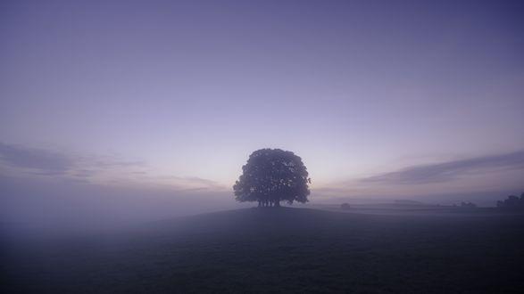 Обои Одинокое дерево на холме, окутано густым туманом