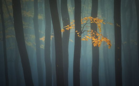 Обои Осенние деревья стоят в тумане, фотограф Краси Матаров