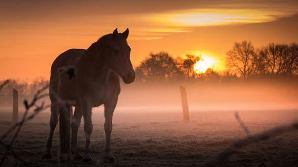Обои Лошадь на туманном зимнем поле, фотограф Christian Wilmes