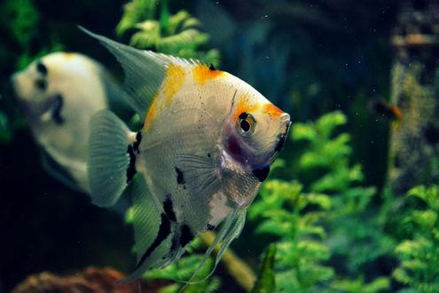 Обои Рыбы под водой, by Agata