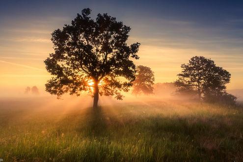 Обои Утренний туман в сельской местности недалеко от Poznan, Poland / Познани, Польша, фотограф Janusz BЕ'aszkiewicz
