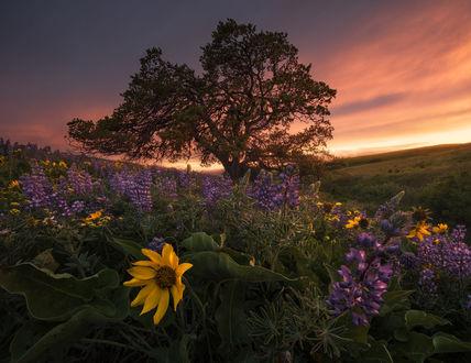 Обои Работа Вечер в горах Columbia hills, Washington / Колумбии, штат Вашингтон, фотограф Blake Randall