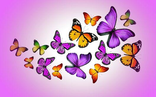 Обои Разноцветные бабочки в полете
