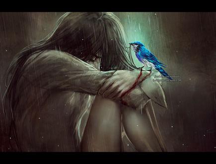 Обои У девушки, сидящей под дождем, на руке сидит птица, by NanFe
