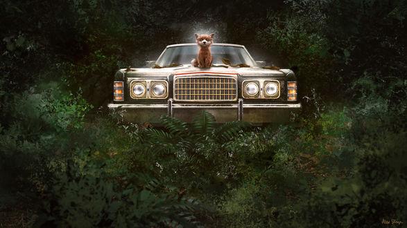 Обои Лиса сидит на капоте авто, стоящего в лесу, by AlexShiga