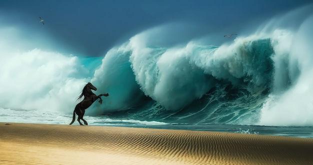 Обои Лошадь встала на дыбы перед огромной волной, фотограф Виталий Емельянов