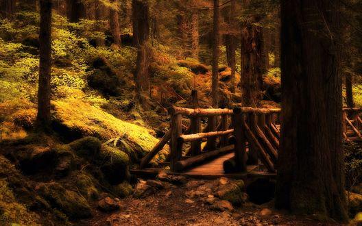 Обои Мост над лесным ручьем
