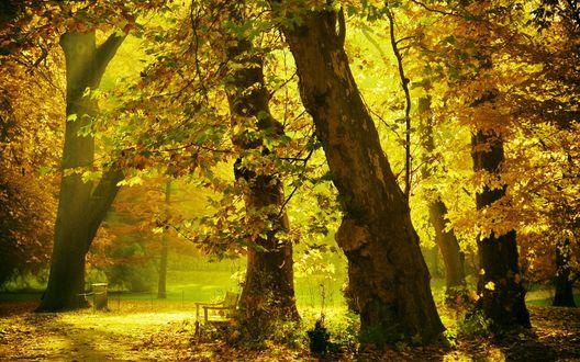 Обои Скамейка в парке, солнечный свет сквозь осенние кроны деревьев