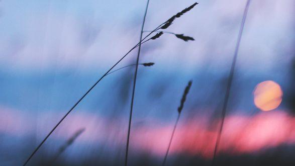 Обои Травинки на размытом фоне закатного неба