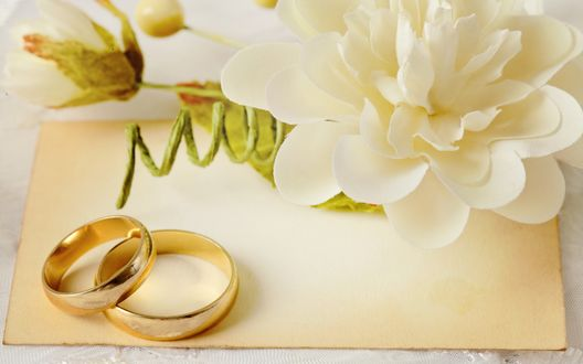 Обои Обручальные кольца на листе бумаги рядом с белым цветком