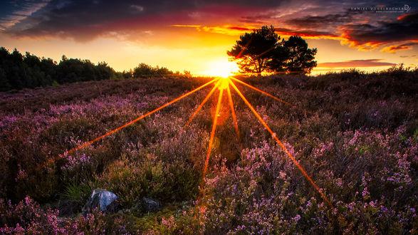 Обои Ослепительное солнце освещает цветущее поле, фотограф Daniel Vogelbacher