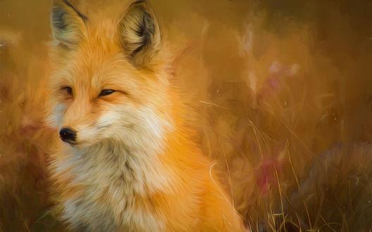 Обои Рыжая лисичка, сидя в траве, прищурившись смотрит куда-то в сторону, by tpsdave