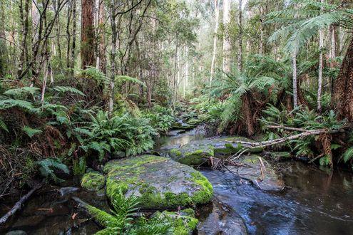 Обои Поток в лесу по пути к водопаду Калимна, фотограф Wayne WRX