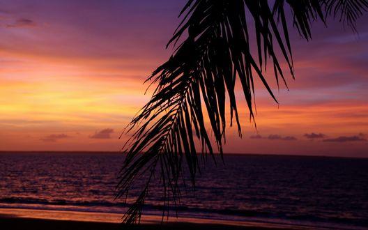 Обои Пальмовая ветка на фоне закатного неба и моря