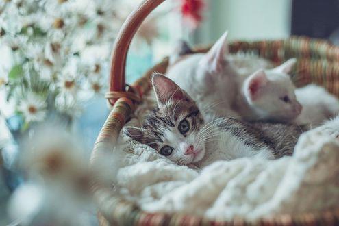 Обои Плетенная корзина с котятами стоит у цветов в вазе