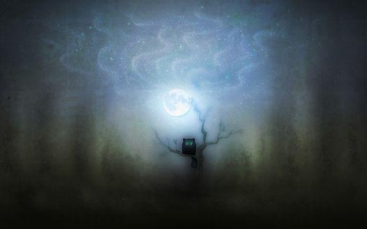 Обои Очень темной ночью под луной одинокая кошечка сидит на дереве