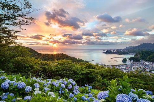 Обои На переднем плане цветы голубой гортензии, вдалеке гавань c портом Matsuzaki / Мацузаки, а также острова Dogashima / Догасимане, фотограф Tommy Tsutsui