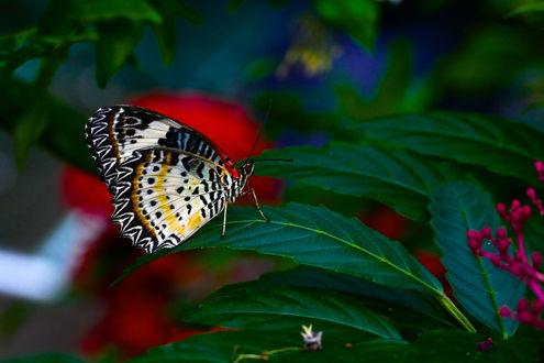 Обои Бабочка сидит на зеленом листочке, фотограф Svetlana Povarova Ree