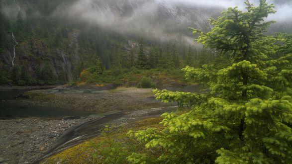 Обои Горная речка в затуманенном Tongass National Forest, Alaska, USA / Национальном лесу Тонгасс, штат Аляска, США