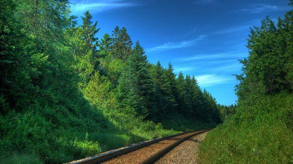 Обои Железная дорога среди леса под живописным синим небом