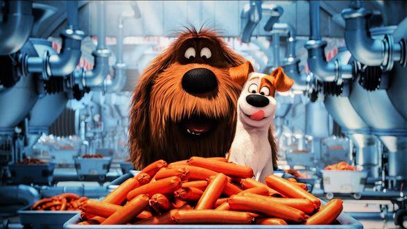 Обои Два пса на колбасном заводе, кадр из мультфильма Тайная жизнь домашних животных