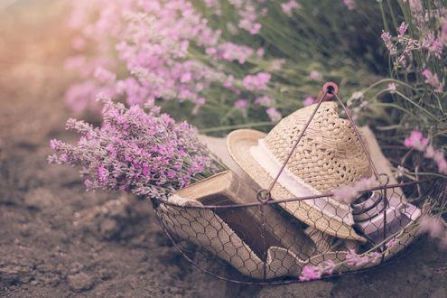 Обои Шляпа и цветы лаванды лежат в корзине. Фотограф Sevda Stancheva