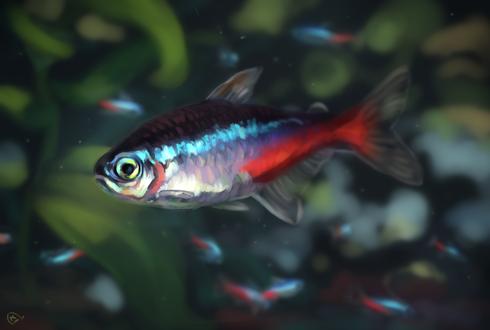 Обои Маленькая рыбка на размытом фоне, by AlaxendrA