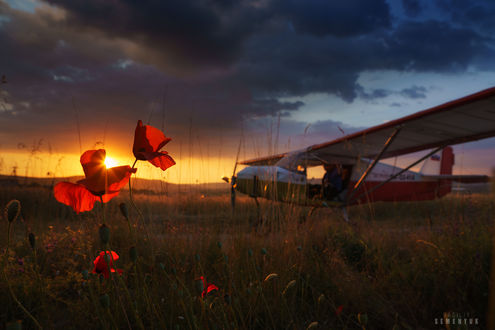 Обои Красные маки в поле, где стоит самолет, на фоне заката. Фотограф Семенюк Василий