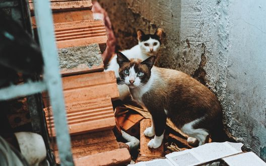 Обои Двое котов приткнулись возле полуразрушенной лестницы дома