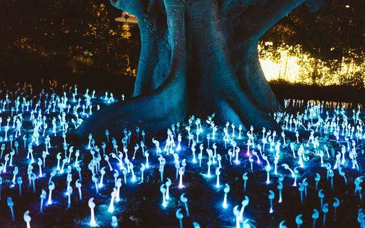 Обои Светящиеся голубым цветом ряды грибов возле огромного дерева