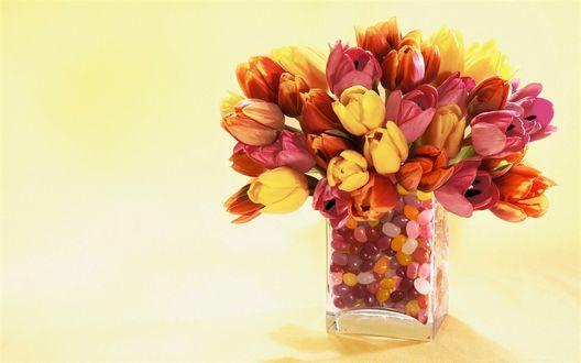 Обои Разноцветные тюльпаны в прозрачной вазе с цветными камушками