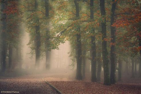 Обои Парк в утреннем тумане, фотограф Patrice Thomas