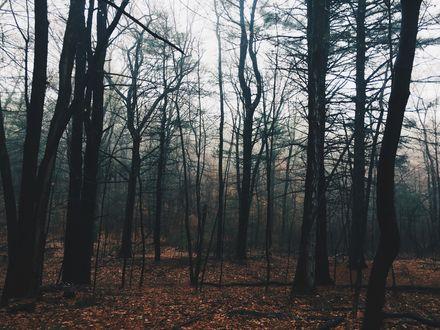 Обои Голые осенние деревья окутаны туманом