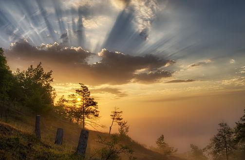 Обои Солнечное утро на склоне с деревьями и пеньками, by Rainer Schund