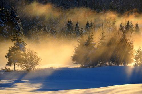 Обои Лучи утреннего солнца над зимним хвойным лесом
