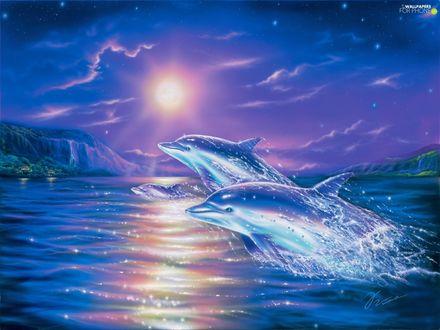 Обои Дельфины над водой в лунную ночь
