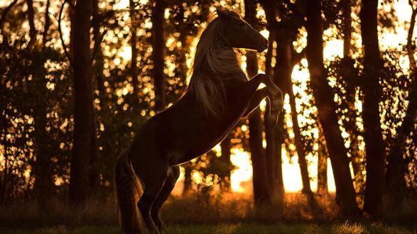 Обои Лошадь на фоне деревьев, освещенных солнцем, фотограф Aleksandra Kielreuter