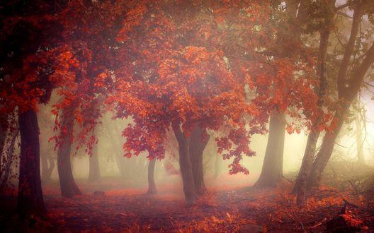 Обои Осенние деревья в парке окутаны густым туманом