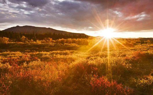 Обои Яркое солнце освещает природу