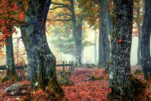 Обои Деревья в тумане, фотограф Patrice Thomas